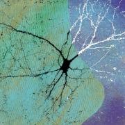 psychiatry neurons